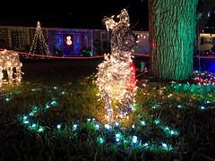 Christmas Lights Reindeer (Lux Llama Productions) Tags: christmas lights holiday holidays winter december jan january dec decor decorations decoration prop jesus usa us unitedstates florida bocaraton house suburb hot light led cool awesome santa sleigh reindeer deer trees tree orb