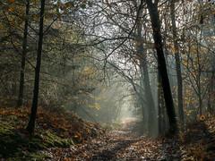 Miggelenberg Tegenlicht (ome.henk) Tags: amsterdamhenkwieland herfst hogeveluwe landal miggelenberg veluwe bomen bos landscape landschap 2018 kootwijk burgers natuur zand dieren
