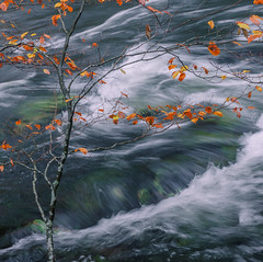Autumn Swoosh from River Brathay (colinbell.photography) Tags: