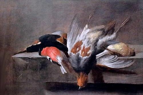 IMG_6715 Jan Vonck. 1631-1664. Amsterdam Dead birds. Oiseaux morts Dresden. Gemäldegalerie Alte Meister. Il est vrai que de nos jours on préfère les voir vivants.  It is true that nowadays we prefer to see them alive.