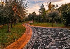 Autunno Giardino Italiano dopo la pioggia (danilocolombo69) Tags: danilocolombo69 danilocolombo nikonclubit acciotolato ulivi cipressi viottolo giardino asbeautifulasyouwant