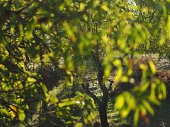 Almond Tree Spain Andalusia Sierra Nevada Alpujarras © Mandelbaum Spanien Andalusien © Spain Andalusia © Andalucía La Alpujarra Granadina © (hn.) Tags: valor spain europe andalusia andalucia spanien eu europa andalusien heiconeumeyer copyright copyrighted tp2018anda es sierranevada laalpujarra alpujarras provinciadegranada alpujarragranadina españa gegenlicht backlight contraluz baum tree pflanze plant nature natur mandelbaum prunus prunusdulcis almond almondtree almendro árbol agriculture farming campo feld field landwirtschaft laub blatt leaf leaves blätter