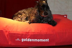 Contest first place 26-11-2018 for Golden Moment (excellentzebu1050) Tags: dog doggy closeup cockerspaniel cocker spaniel pet animal indoors farmdog farm coth coth5 sunrays5