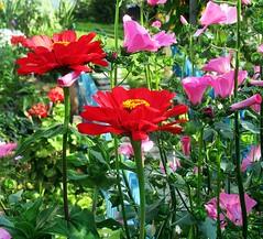 Цветочки (lvv1937) Tags: цветы сад клумба осень explore мыизяфа