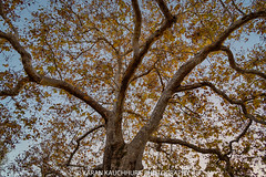 Garin Park (Karanmohan) Tags: garinpark sfbay bayarea