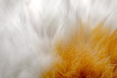 *** (donnicky) Tags: cat closeup fluffy fur furry indoors macro nopeople pet publicsec лилу d850