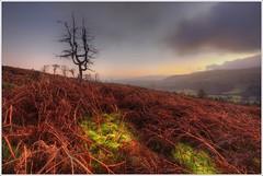 Bracken and Moss, Craig Carreg Gleisiad,  Brecon Beacons (neilholman) Tags: bracken moss brecon beacons craig carreg gleisiad