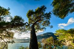 Entre Pin de Ciel (Greg Sorbier) Tags: naturebynikon capmartin 06190 frecnhriviera