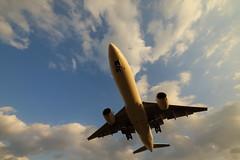 Flying over (Teruhide Tomori) Tags: japanairlines boeing777 airplane jet plane aircraft osakainternationalairport landing itamiairport japan 大阪国際空港 伊丹空港 日本航空 jal