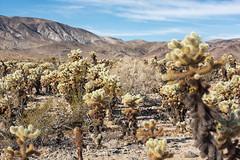 untitled (19 of 28).jpg (xen riggs) Tags: desert california joshuatreenationalpark february2018