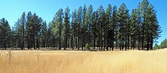 Central Oregon (Eclectic Jack) Tags: eastern oregon trip october 2018 rural farm farming autumn fall mountains irrigation tree forest wood grass wide angle wideangle blue green gold pine