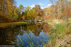 HillsDales2018_DSC_0007 (KKfromBB) Tags: kkfrombb nikon nikond5100 hilldales metropark five rivers metroparks autumn fall 2018 outdoor nature color tree leaf dogwoodpond