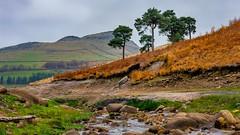 Trees on the skyline (chromaphoto uk) Tags: dovestone peakdistrict nationalpark england greatermanchester reservoir landscape autumn colours