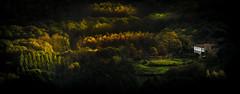 Val do Ulla (Noel F.) Tags: sony a7r a7rii ii fe 100400 gm val ulla boqueixon san miguel castro galiza galicia outono fall autumn otoño