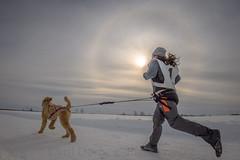 9 (Cyril Doche Photograhie) Tags: animal canada pharélie reportage sundog activitéextérieure canicross chiens compétiteur compétition course extérieur halosolaire hiver neige phénomèneoptique sport sportindividuel