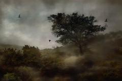 Create A World (Christina's World!) Tags: landscape trees torreypines environment textures sky birdsflying dark plants forest oldmasters topclass innamoramento