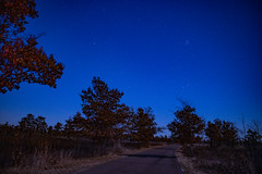 Starry Evening at Saint Croix State Park (Tony Webster) Tags: minnesota saintcroixstatepark stcroixstatepark astrophotography bluehour night stars trees winter