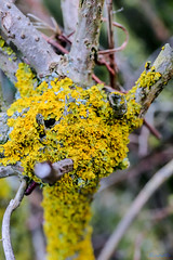 Nettlehill Circular Walk 6th January 2019 (boddle (Steve Hart)) Tags: nettlehill circular walk 6th january 2019 rugby england unitedkingdom gb steve hart boddle steven bruce wyke road wyken coventry united kingdon great britain canon 5d mk4 6d 100400mm is usm ii 2470mm standard dji fc2103 mavic air wild wilds wildlife life nature natural bird birds flowers flower fungii fungus insect insects spiders butterfly moth butterflies moths creepy crawley winter spring summer autumn seasons sunset weather sun sky cloud clouds panoramic landscape 360 arial