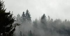 Ambiance hivernale (Vosges, France)