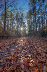 herbstzeitlos (wolf238) Tags: leave laub waldweg herbst autumn fall zellwald