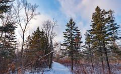 Hiking Trail on the St. Croix River, Minnesota (Tony Webster) Tags: december minnesota saintcroixstatepark stcroixstatepark hike hiking hikingtrail snow statepark trail trees winter crosbytownship unitedstates us