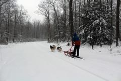 IMG_0034_AutoColor (LifeIsForEnjoying) Tags: snow mushing dog sledding dogs kaskae sitka nike