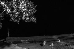 apparition (Shahrear94) Tags: ostentatious bnw blackandwhite night slow shutter bangladesh beach dogs slowshutter dark sand concept unseen flicker lights noise sky streetphotography street structure
