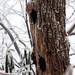 Snowfall in Nelson County, Va.