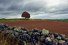 Yorkshire tree in a field (llamnudds) Tags: llamnuds affinityphoto madeinaffinity madewithaffinity yorkshire countryside uk britain england tree sky wall field