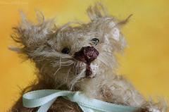 fuzzy bear (sure2talk) Tags: macromondays picktwo fuzzytoy fuzzybear teddy designerbear handmade sandradecock belgium nikond7000 nikkor85mmf35gafsedvrmicro macro closeup