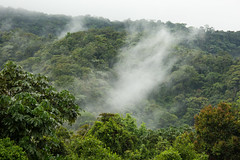 Sub-Andean rainforest - Colombia (JulGlouton) Tags: subandean forest rainforest colombia otun quimbaya biodiversity