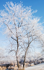 Blue and White (Ruth Voorhis) Tags: frost snow sky trees branches twigs shrubs landscape outdoors