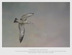 Jonathan Livingston Seagull (Christina's World!) Tags: richardbach book jonathanlivingstonseagull bird flying seagull sky text textures inspiration birdflying pastels galleriadarte