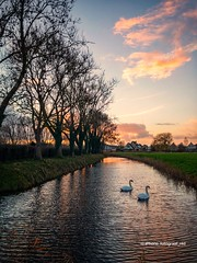 (iPhone Fotograaf) Tags: landscape sunset nature evening clouds dutch water sky iphone8plus reflection groningen autumn animal