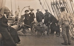 ANTARCTIC EXPEDITION by ROALD AMUNDSEN, HOBART HARBOUR, TASMANIA -  March 1912 (Aussie~mobs) Tags: survivors leaddogs roaldamundsen explorer antarctic 1911 hobart ship onboard australia antarctica vintage expedition southpole exploration dogs huskies greenlandsleddogs