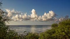Nubes cumuliformes al amanecer (Fotgrafo-robby25) Tags: alicante amanecer costablanca marmediterráneo nubes sonyilce7rm3 árbolesyarbustos