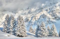 Schwägalp #1 (Tjaldur66) Tags: winter snow mountains rockwall firtrees swissalps swissmountains switzerland easternswitzerland schwägalp winterwood clouds winterwonderland hdr tonemapping
