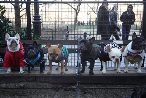 WSP - 2018 NYC Frenchie Bench