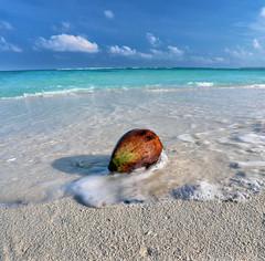 Coconut (Robyn Hooz) Tags: malaysia borneo asia cononut noce cocco spiaggia beach mare blue blu coral reef memories viaggi travel east est oriente
