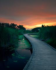 Boardwalk Pekapeka Wetlands (Jos Buurmans) Tags: boardwalk evening hastings hawkesbay landscape nature newzealand northisland pekapekawetlands pond stream sunset walkways wetland wetlands nz