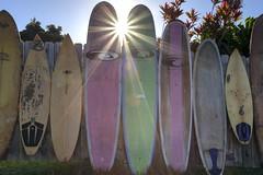 Sunny Surfboards (Edmonton Ken) Tags: surfboard fence sun star flare pink green yellow starburst sunrise hawaii maui travel attraction jaws cafe tourism