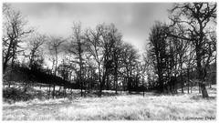 """""""Ciel et terre"""" (Corinne DEFER - DoubleCo) Tags: plateaudemonséguise paysage contraste lanscape corinnedefer ciel terre plaineduvar lebroc hiver alpesmaritimespaca06nuages"""