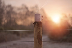 Hot and Cold... (KissThePixel) Tags: sunrise mug cup cupoftea mugoftea pink pastel pastelpink fence woodland woodenfence metalfence frost frosty frostymornings morning sunrises january trees landscape steam hot cold winter winterscene nikon nikond750 50mm macro bokeh light