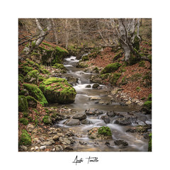 _ATP4738 (anahí tomillo) Tags: nikond7500 sigma1750f28 lightroom paisaje landscape naturaleza nature otoño autunm árbol tree bosque woods