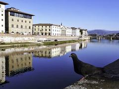 Firenze_arno_pigion (Francesco_Finocchiaro) Tags: firenze toscana luce piccione specchio arno lungarno uffizi italia colore occhio