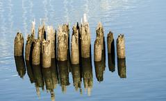 Calm waters. (Omygodtom) Tags: scene scenery senery setting river willamette past outside outdoors nikon70300mmvrlens d7000 digital reflection explore
