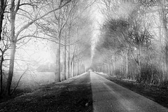 The End Is Never Clear (Alfred Grupstra) Tags: tree nature forest fog blackandwhite landscape outdoors woodland road footpath mist scenics winter nopeople autumn season branch nonurbanscene mystery spooky