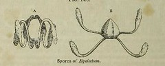 This image is taken from Page 358 of The microscope: and its revelations (Medical Heritage Library, Inc.) Tags: microscopy natural history wellcomelibrary ukmhl medicalheritagelibrary europeanlibraries date1856 idb28136974