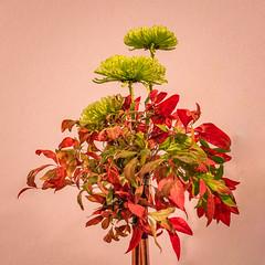 Folies flores-12 (Merlin H.) Tags: alsace hautrhin mulhouse fleur flowers foliesflores