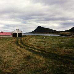 árnes (lawatt) Tags: árnes farm barn reyjaneshryna hill slope pasture sheep clouds árneshreppur westfjords iceland film 120 portra 800 hasselblad 80mm